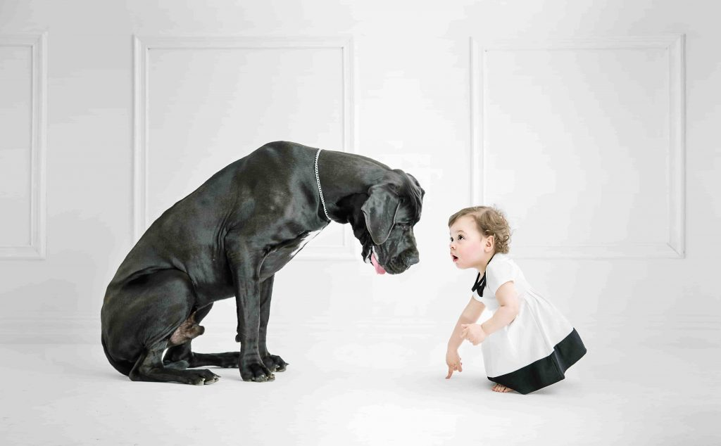 great dogs for protection